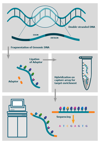 whole-exome-sequencing