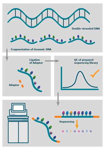 whole-genome-sequencing